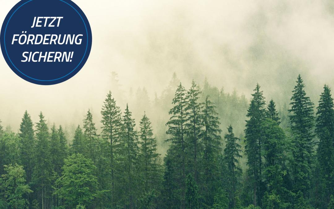 Bayern: Deutlich höhere Förderungen für Klimafeste Wälder