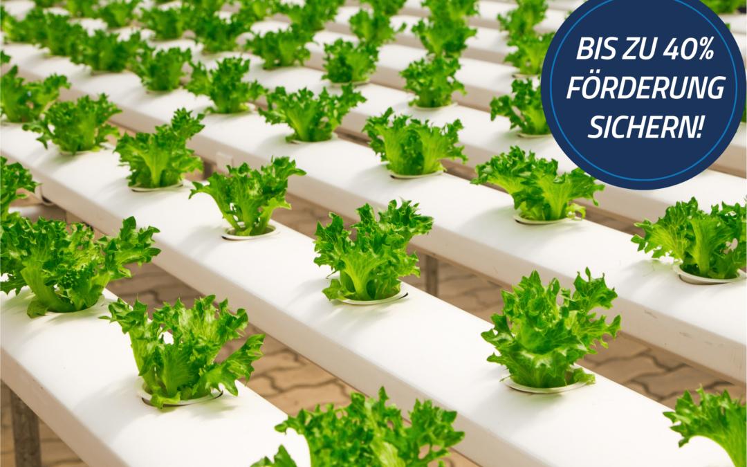 Förderung für den Neubau von Niedrigenergie-Gebäuden für die pflanzliche Erzeugung